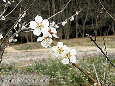 [Imagen: hanakotoba-secret-meanings-behind-9-flow...apan-5.jpg]