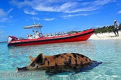 připojte se na Bahamy21 příliš mladý online seznamka