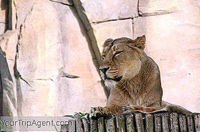 Cougar incontri nel Regno Unito
