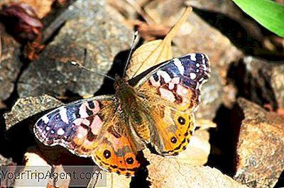 sommerfugle mens de daterer