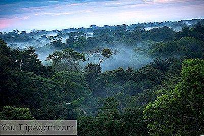 Kisah Dibalik Bagaimana Hutan Hujan Amazon Mendapatkan Namanya 2020