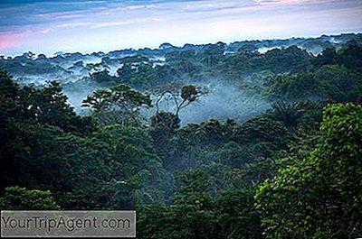Regenwald frauen nackt